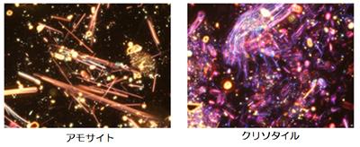 顕微鏡写真.png