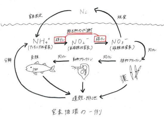 発酵食品と水質検査